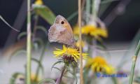 Schmetterling_JH.jpg