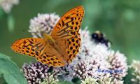 Schmetterling_JH_1.jpg